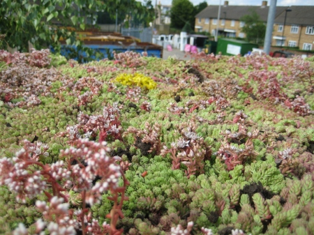 Close up of green roof